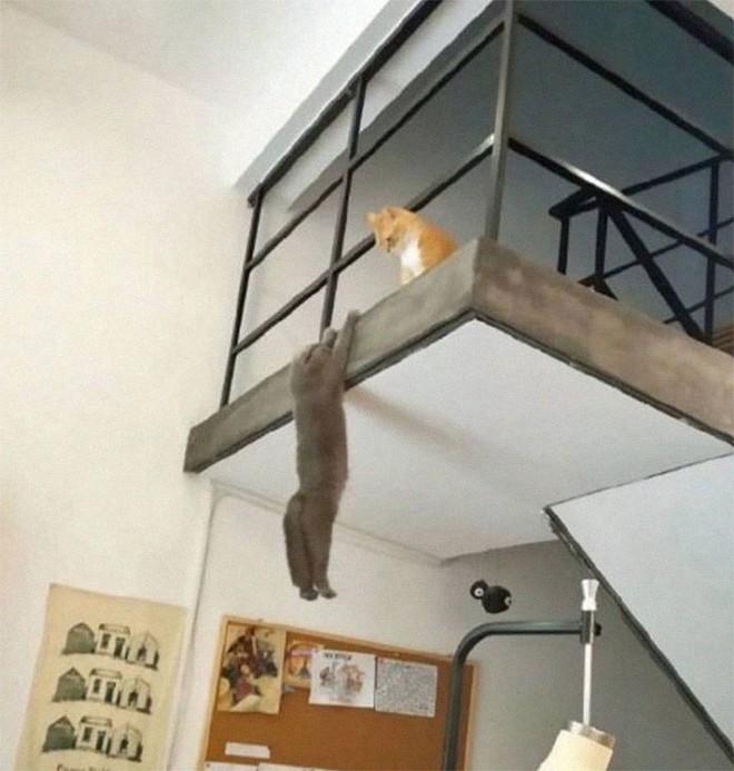 Chùm ảnh vui: Những hành động kỳ lạ đến không tưởng của loài mèo khiến các định luật vật lý trở nên vô nghĩa - Ảnh 21.