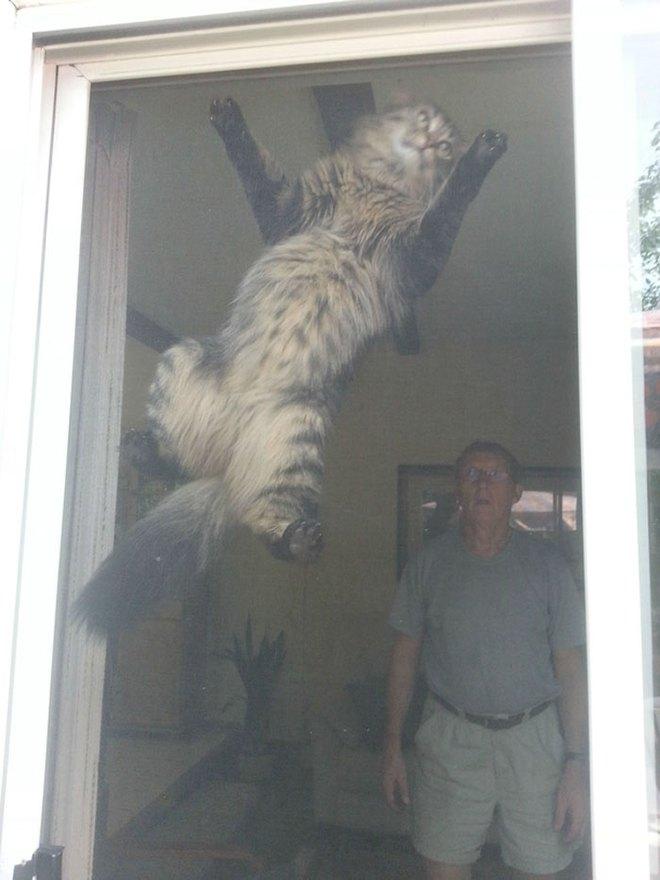 Chùm ảnh vui: Những hành động kỳ lạ đến không tưởng của loài mèo khiến các định luật vật lý trở nên vô nghĩa - Ảnh 22.