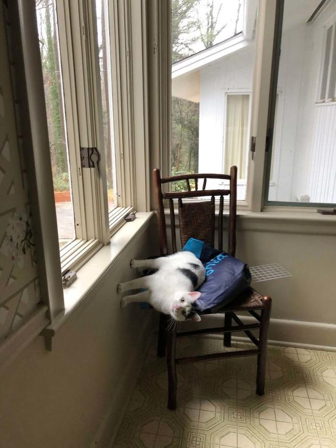 Chùm ảnh vui: Những hành động kỳ lạ đến không tưởng của loài mèo khiến các định luật vật lý trở nên vô nghĩa - Ảnh 23.