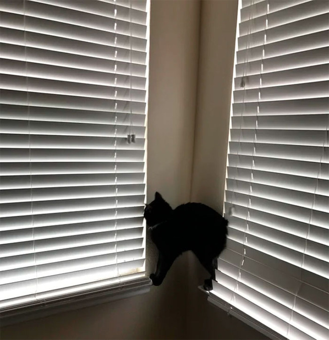 Chùm ảnh vui: Những hành động kỳ lạ đến không tưởng của loài mèo khiến các định luật vật lý trở nên vô nghĩa - Ảnh 24.