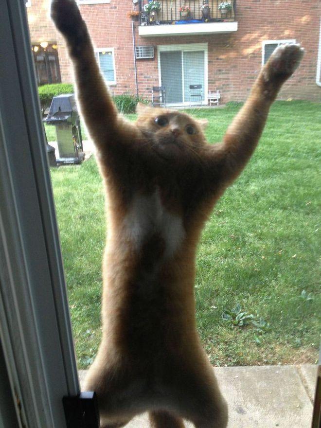 Chùm ảnh vui: Những hành động kỳ lạ đến không tưởng của loài mèo khiến các định luật vật lý trở nên vô nghĩa - Ảnh 26.