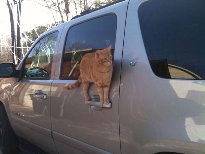 Chùm ảnh vui: Những hành động kỳ lạ đến không tưởng của loài mèo khiến các định luật vật lý trở nên vô nghĩa - Ảnh 27.