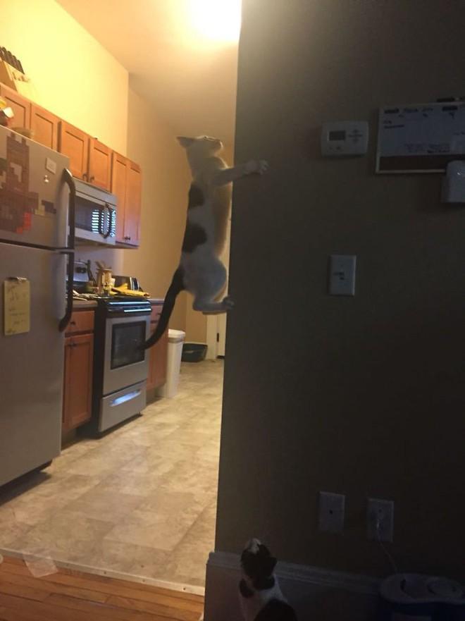 Chùm ảnh vui: Những hành động kỳ lạ đến không tưởng của loài mèo khiến các định luật vật lý trở nên vô nghĩa - Ảnh 29.