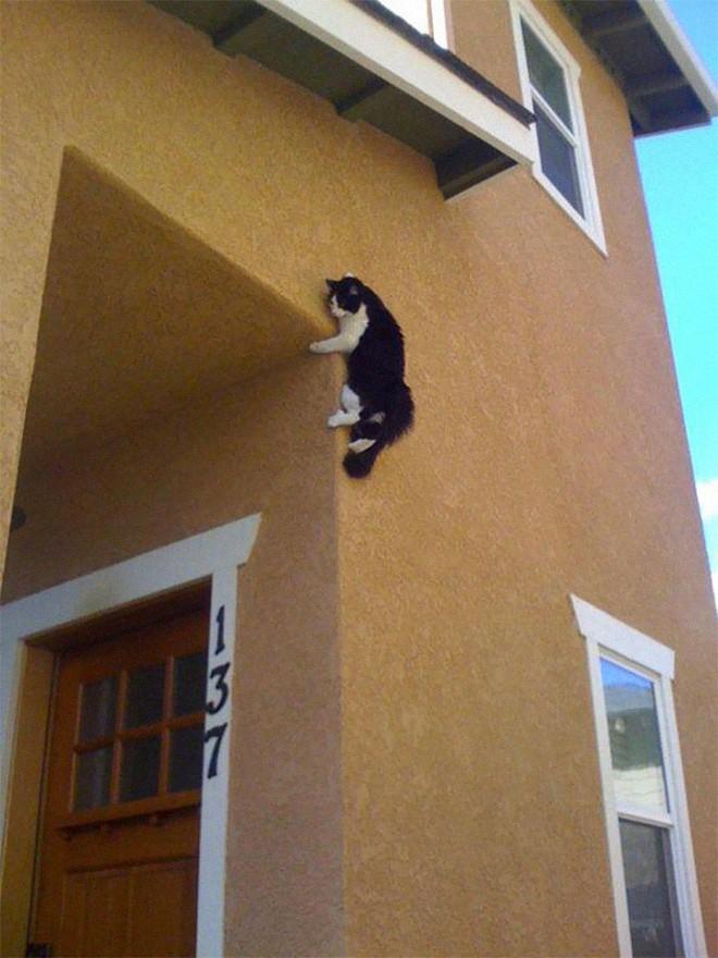 Chùm ảnh vui: Những hành động kỳ lạ đến không tưởng của loài mèo khiến các định luật vật lý trở nên vô nghĩa - Ảnh 3.