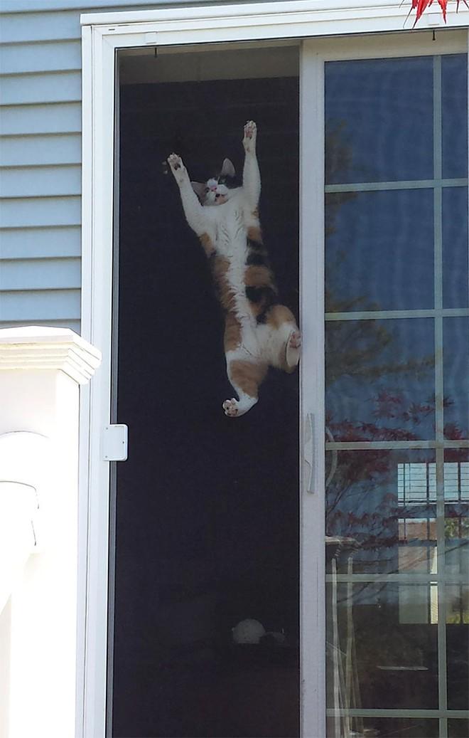 Chùm ảnh vui: Những hành động kỳ lạ đến không tưởng của loài mèo khiến các định luật vật lý trở nên vô nghĩa - Ảnh 30.
