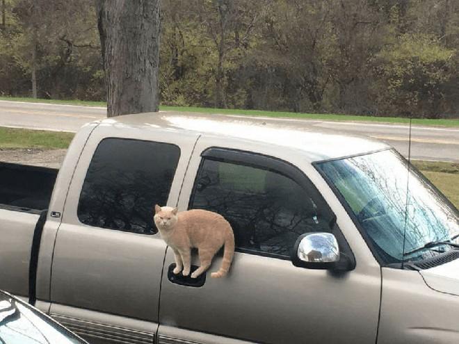 Chùm ảnh vui: Những hành động kỳ lạ đến không tưởng của loài mèo khiến các định luật vật lý trở nên vô nghĩa - Ảnh 4.