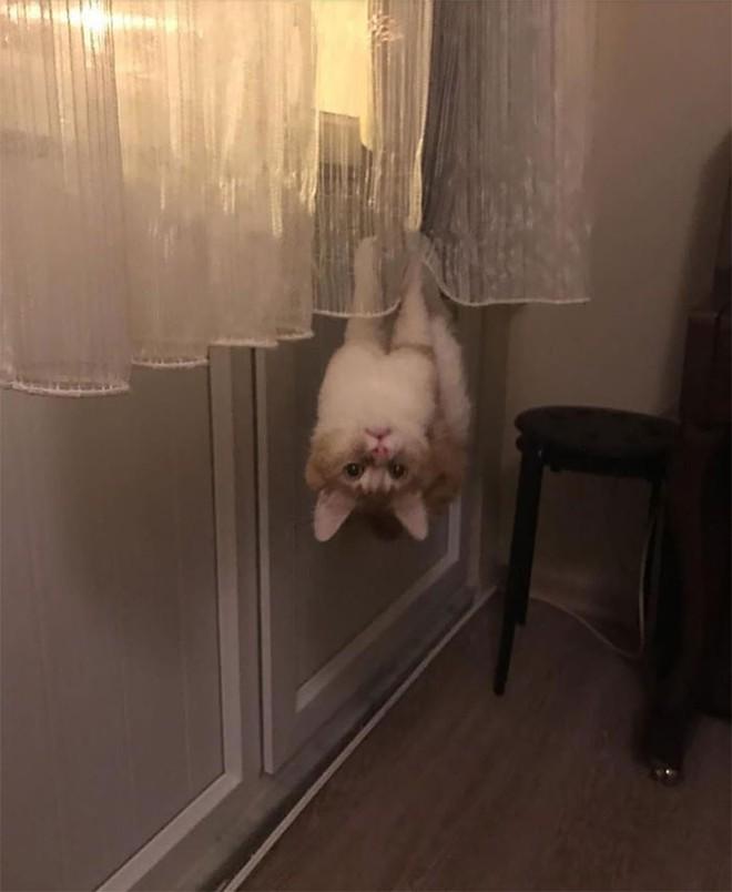 Chùm ảnh vui: Những hành động kỳ lạ đến không tưởng của loài mèo khiến các định luật vật lý trở nên vô nghĩa - Ảnh 5.