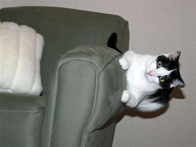 Chùm ảnh vui: Những hành động kỳ lạ đến không tưởng của loài mèo khiến các định luật vật lý trở nên vô nghĩa - Ảnh 7.