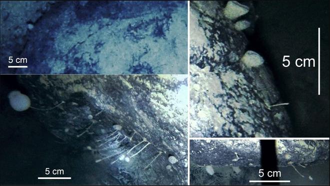 Khoan sâu 900m xuống lớp băng Nam Cực, các nhà khoa học bối rối khi phát hiện sinh vật kỳ lạ chưa từng được biết đến - Ảnh 2.