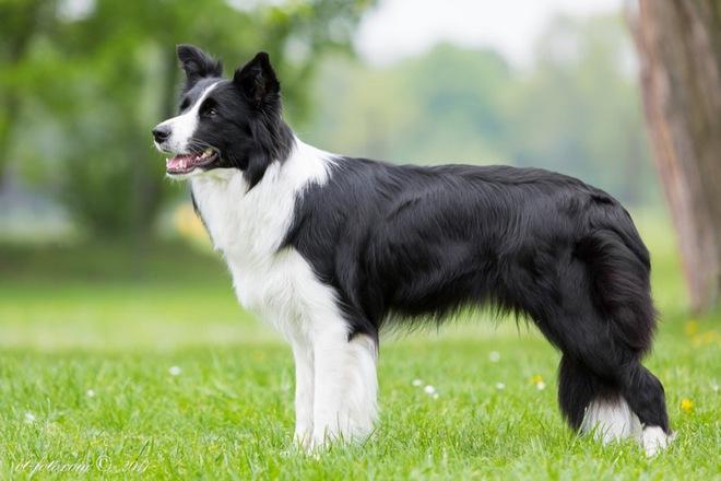 Một con chó ở Mỹ vừa nhận được khoản tiền thừa kế 5 triệu USD - Ảnh 1.
