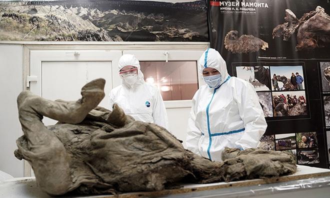 Nga truy tìm virus thời tiền sử trong xác ngựa bị chôn vùi 4500 năm dưới băng vĩnh cửu - Ảnh 1.