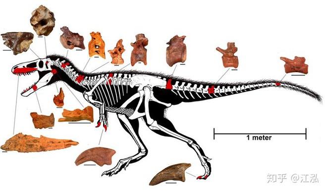 Giải mã bí ẩn về sự trỗi dậy của họ Tyrannosaurus - Khủng long bạo chúa - Ảnh 3.