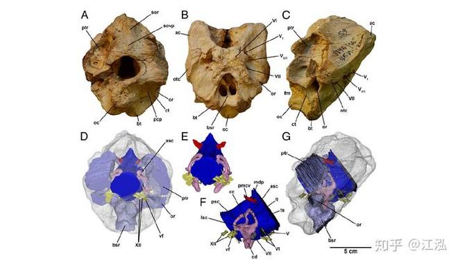 Giải mã bí ẩn về sự trỗi dậy của họ Tyrannosaurus - Khủng long bạo chúa - Ảnh 7.