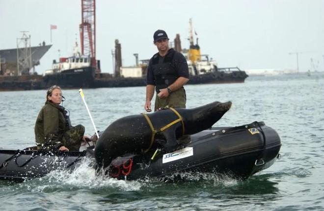 Động vật biển có thể giúp được gì cho con người trong lĩnh vực quân sự? - Ảnh 4.