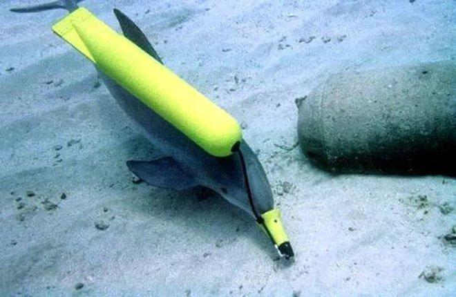 Động vật biển có thể giúp được gì cho con người trong lĩnh vực quân sự? - Ảnh 3.