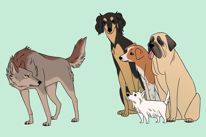 Chó đã làm bạn với con người từ ít nhất 23.000 năm trước - Ảnh 2.