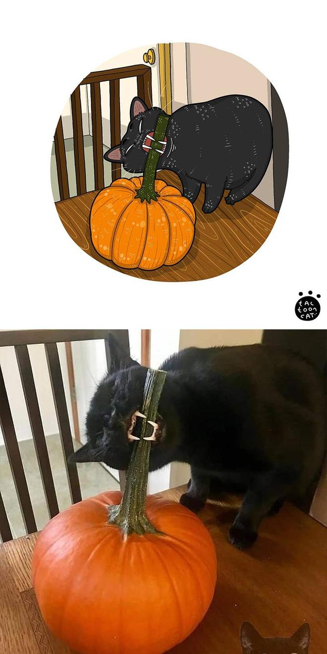 [Chùm ảnh vui] Khi ảnh meme của các boss mèo được vẽ lại siêu đáng yêu khiến ai xem xong cũng phải mỉm cười - Ảnh 14.