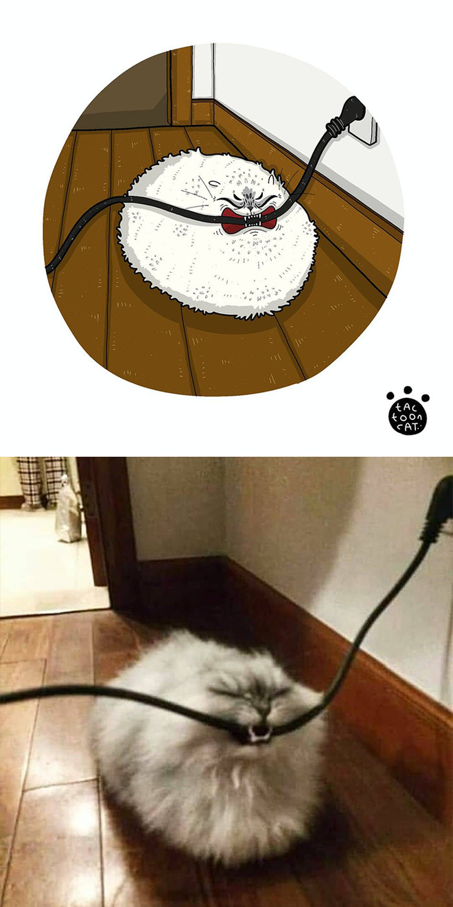 [Chùm ảnh vui] Khi ảnh meme của các boss mèo được vẽ lại siêu đáng yêu khiến ai xem xong cũng phải mỉm cười - Ảnh 3.