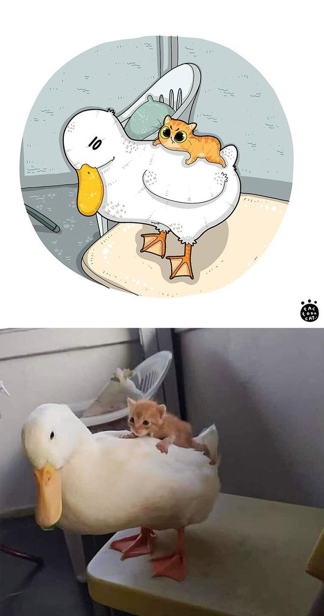 [Chùm ảnh vui] Khi ảnh meme của các boss mèo được vẽ lại siêu đáng yêu khiến ai xem xong cũng phải mỉm cười - Ảnh 21.