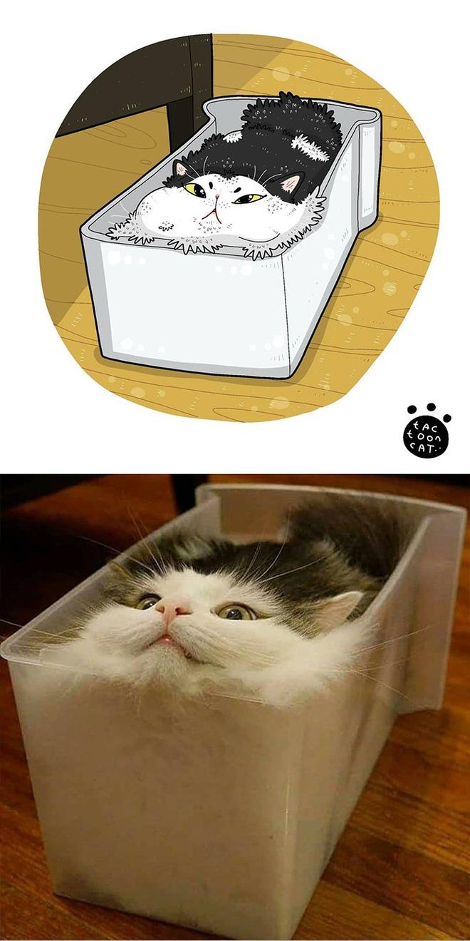 [Chùm ảnh vui] Khi ảnh meme của các boss mèo được vẽ lại siêu đáng yêu khiến ai xem xong cũng phải mỉm cười - Ảnh 17.