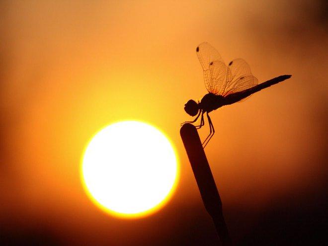 Ánh nắng Mặt Trời không chỉ duy trì sự sống trên Trái Đất, thứ vitamin S này còn chữa được những bệnh tâm lý như trầm cảm - Ảnh 5.