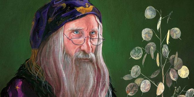Doctor Strange duels magic with Dumbledore: Who will win?  - Photo 2.
