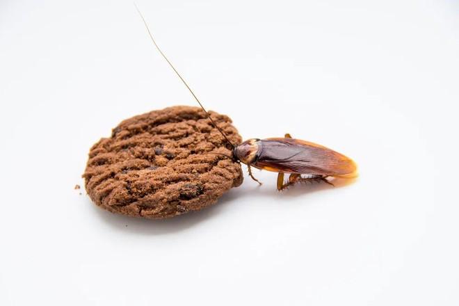 Trong cà phê, bột mì, sô cô la, nước cam… đều có lông chuột, xác bọ rệp và giòi - Ảnh 1.