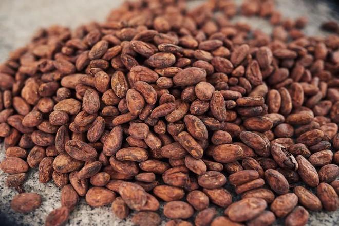 Trong cà phê, bột mì, sô cô la, nước cam… đều có lông chuột, xác bọ rệp và giòi - Ảnh 3.