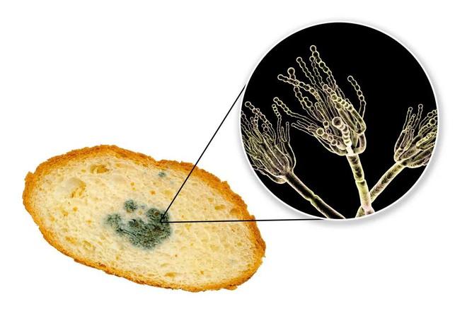Trong cà phê, bột mì, sô cô la, nước cam… đều có lông chuột, xác bọ rệp và giòi - Ảnh 8.