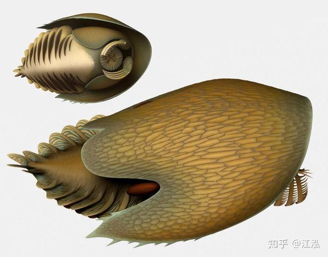 Phát hiện loài quái vật khổng lồ hơn 500 triệu năm tuổi có thân hình giống như một con tàu vũ trụ - Ảnh 5.