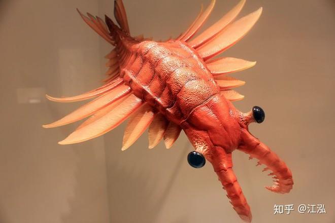 Phát hiện loài quái vật khổng lồ hơn 500 triệu năm tuổi có thân hình giống như một con tàu vũ trụ - Ảnh 7.