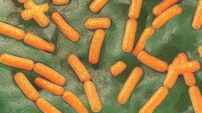 Lần đầu tiên các nhà khoa học quan sát thấy vi khuẩn sử dụng hiệu ứng lượng tử để tồn tại - Ảnh 1.