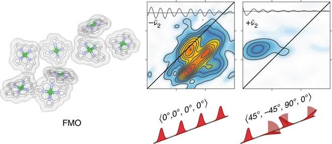 Lần đầu tiên các nhà khoa học quan sát thấy vi khuẩn sử dụng hiệu ứng lượng tử để tồn tại - Ảnh 2.