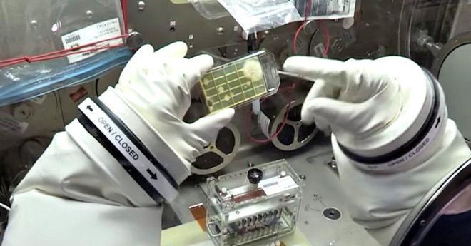 Các nhà khoa học phát hiện 3 chủng vi khuẩn chưa từng thấy trên Trạm Vũ trụ Quốc tế ISS - Ảnh 2.