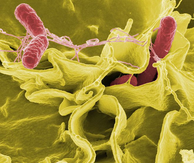 Khoa học chỉ bạn cách khử độc trứng đơn giản, yên tâm thưởng thức trứng sống mà không sợ khuẩn salmonella - Ảnh 3.