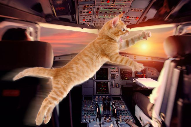 Mèo hoang hóa không tặc: Lẻn vào buồng lái tấn công phi công, ép máy bay quay đầu - Ảnh 1.
