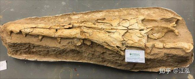 Phát hiện loài Thương long mới sở hữu cá miệng của loài cá sấu - Ảnh 3.