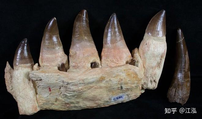 Phát hiện loài Thương long mới sở hữu cá miệng của loài cá sấu - Ảnh 1.