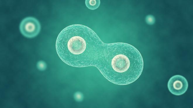 Đột phá: Các nhà khoa học vừa tạo ra được sinh vật nhân tạo đầu tiên có khả năng phân bào - Ảnh 5.