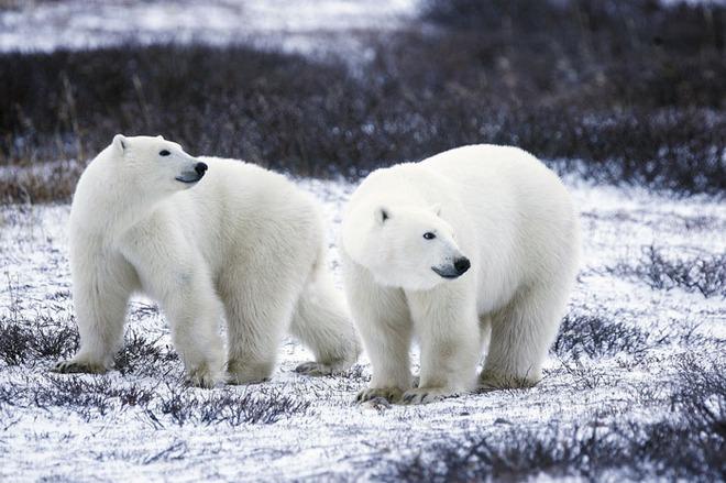 Gấu trắng có da màu đen? Những sự thật ít người biết về các loài động vật - Ảnh 5.
