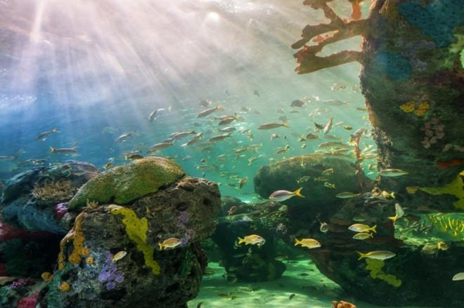Một nửa lượng phát thải khí mêtan trên toàn cầu hóa ra đến từ các hệ sinh thái dưới nước và điều này thực sự rất nguy hiểm - Ảnh 1.