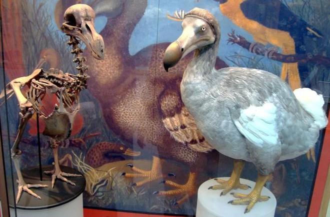 Tại sao những loài động vật trên các hòn đảo luôn kỳ dị hơn những người anh em trên đất liền? - Ảnh 2.
