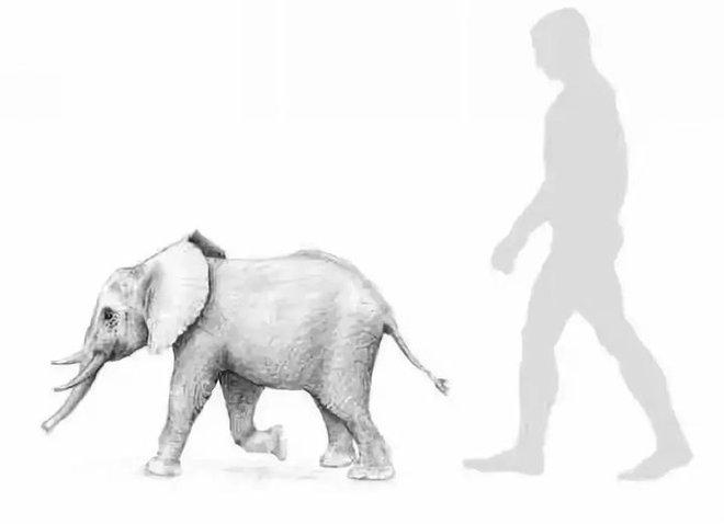 Tại sao những loài động vật trên các hòn đảo luôn kỳ dị hơn những người anh em trên đất liền? - Ảnh 3.