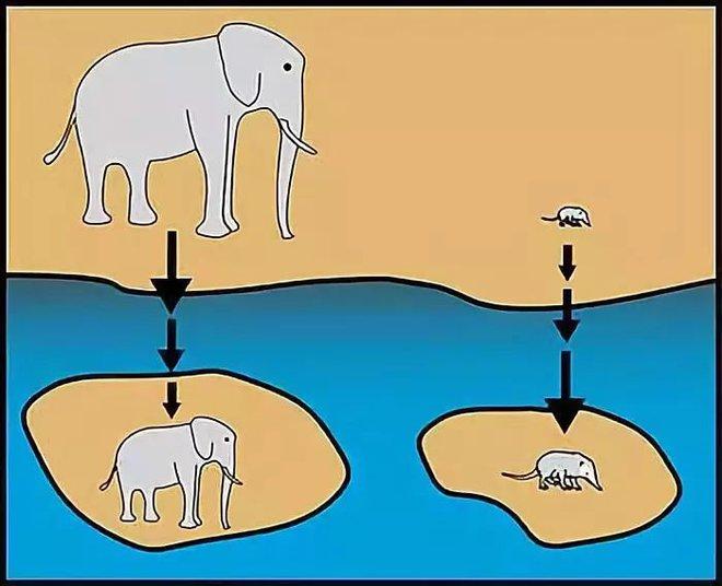 Tại sao những loài động vật trên các hòn đảo luôn kỳ dị hơn những người anh em trên đất liền? - Ảnh 1.