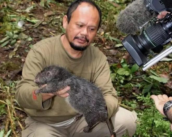 Tại sao những loài động vật trên các hòn đảo luôn kỳ dị hơn những người anh em trên đất liền? - Ảnh 12.
