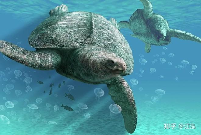 Phát hiện loài rùa biển cổ đại còn to lớn hơn cả một cái ô tô - Ảnh 9.