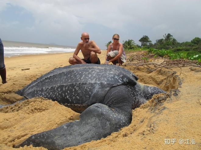 Phát hiện loài rùa biển cổ đại còn to lớn hơn cả một cái ô tô - Ảnh 4.