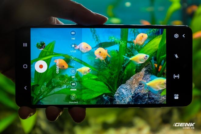 Thử khả năng kháng nước của Galaxy A72 với buổi chụp hình trong bể cá cảnh - Ảnh 3.