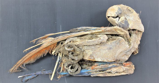 Bí ẩn xác ướp của những con vẹt rừng nhiệt đới bên dưới sa mạc Atacama - Ảnh 5.