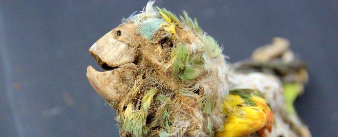 Bí ẩn xác ướp của những con vẹt rừng nhiệt đới bên dưới sa mạc Atacama - Ảnh 4.
